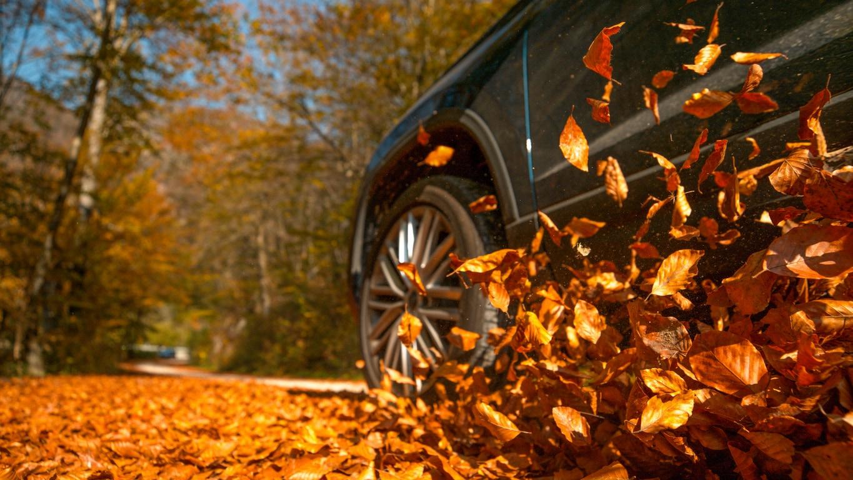 car driving through autumn leaves